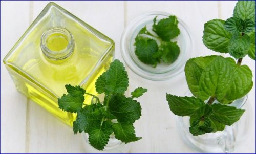 mint fragrance in oil used in soapmaking process