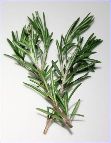 rosemary herb scent used in soaps