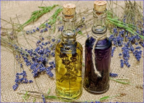 lavender flowers and oil for soap making